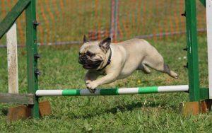 Formation avancée en obéissance canine