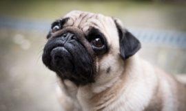 7 Choix pour une éducation réussie de votre chien
