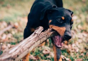 formation educateur comportementaliste canin