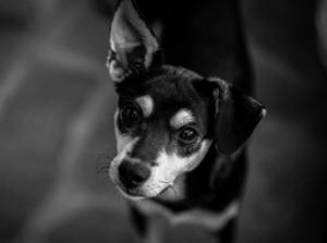 Formation comportementaliste canin par correspondance
